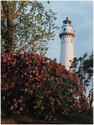 Lighthouse & Lilacs by Carol Hansen